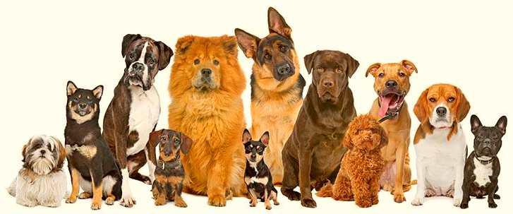 обяви-за-кучета