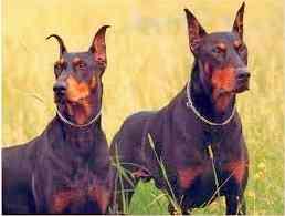 Имена за мъжки кучета.