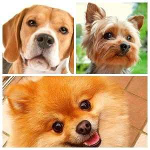 Ухания, които кучетата не понасят
