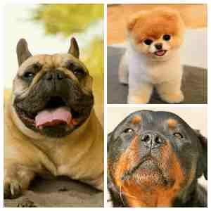 Кучетата не обичат тези миризми